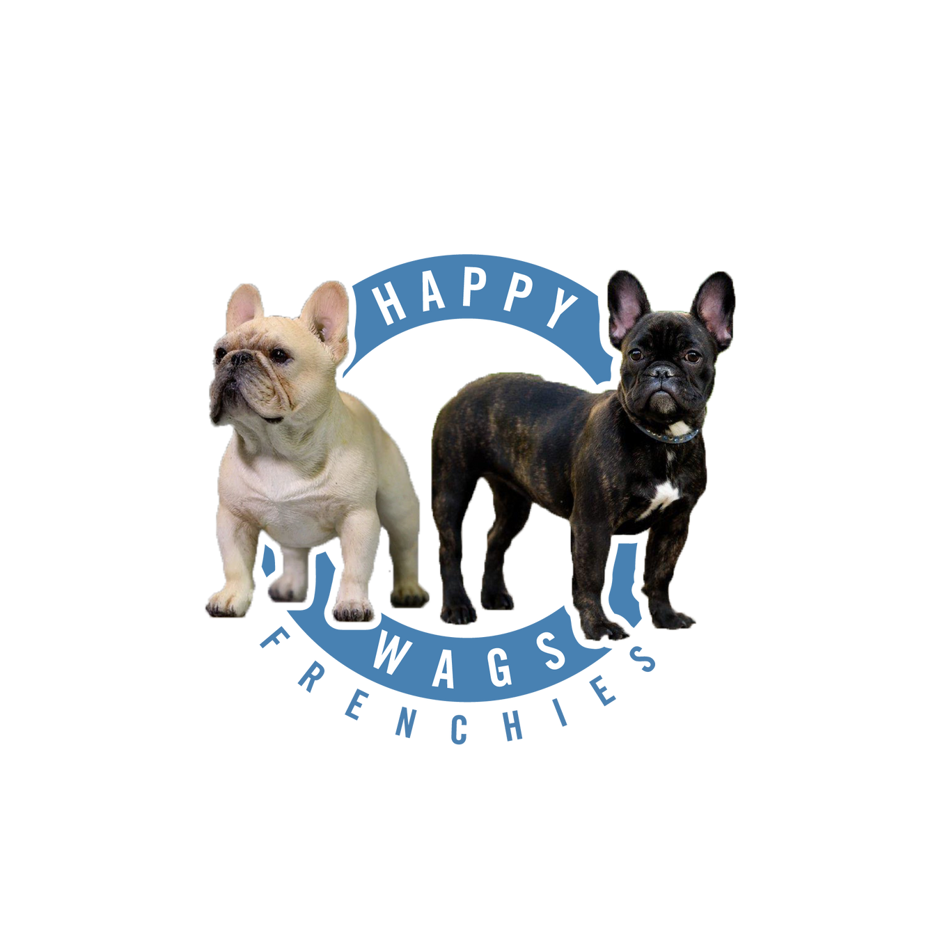 French Bulldogs For Sale | Happy Wags French Bulldogs | Ohio