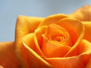 Zonta Rose Day