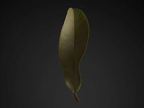 Nenad Mlinarevic Leaf