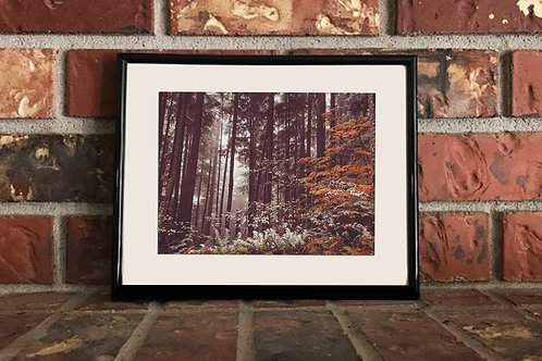 Fall Is Fading - 5 x 7 Matted Photograph