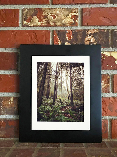 Cascadia - 8x10 Matted Photograph