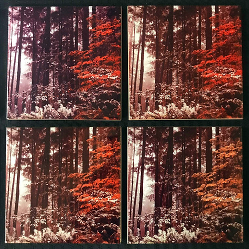 Fall to Winter Coasters, Set of 4