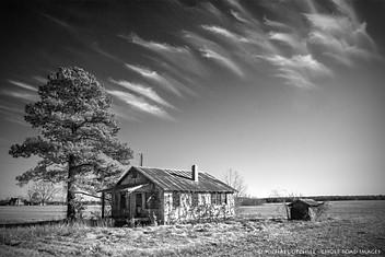 Farmhouse, Pine, and Cirrus Clouds, Roper, North Carolina