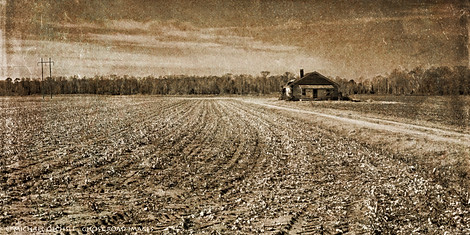 Farmhouse and Winter Cotton Field, Pactolus, North Carolina