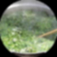 Taiken_Dango_04.png