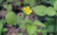 MF1904_018_YabuhebiIchigo.jpg