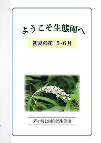 GideBook_Hana_05-06.jpg