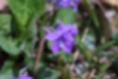MF1904_019_AkaneSumire.jpg