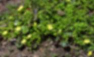MF1904_026_HebiIchigo.jpg