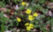 MF1904_017_Mitsubatsuchiguri.jpg