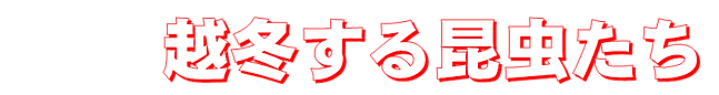 Fuyugoshi07.png