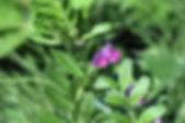 MF1904_022_KarasunoEndou.jpg