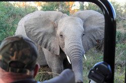 Mjejane Reserve - Elephant
