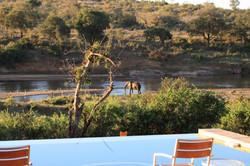 Mjejane Reserve - Elephant from Deck