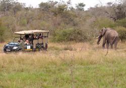 Access to Safari Vehicles