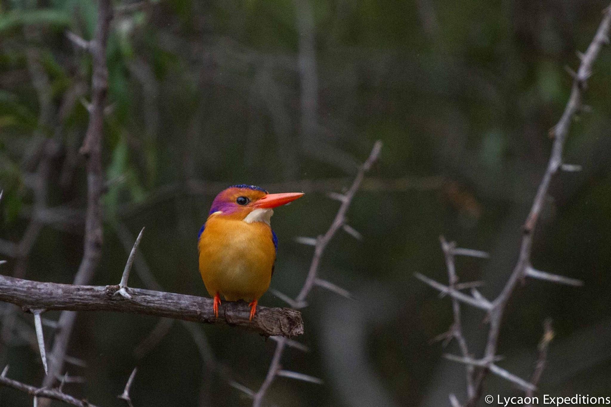 Great Birding on Leadwood Estate