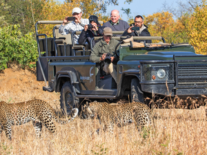 Live Streams from MalaMala, Greater Kruger