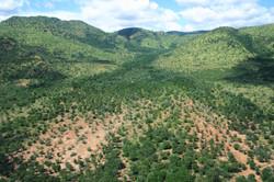 Black Rhino Landscape Tamboti Forest