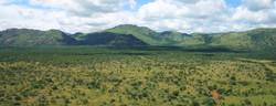 Black Rhino Landscape