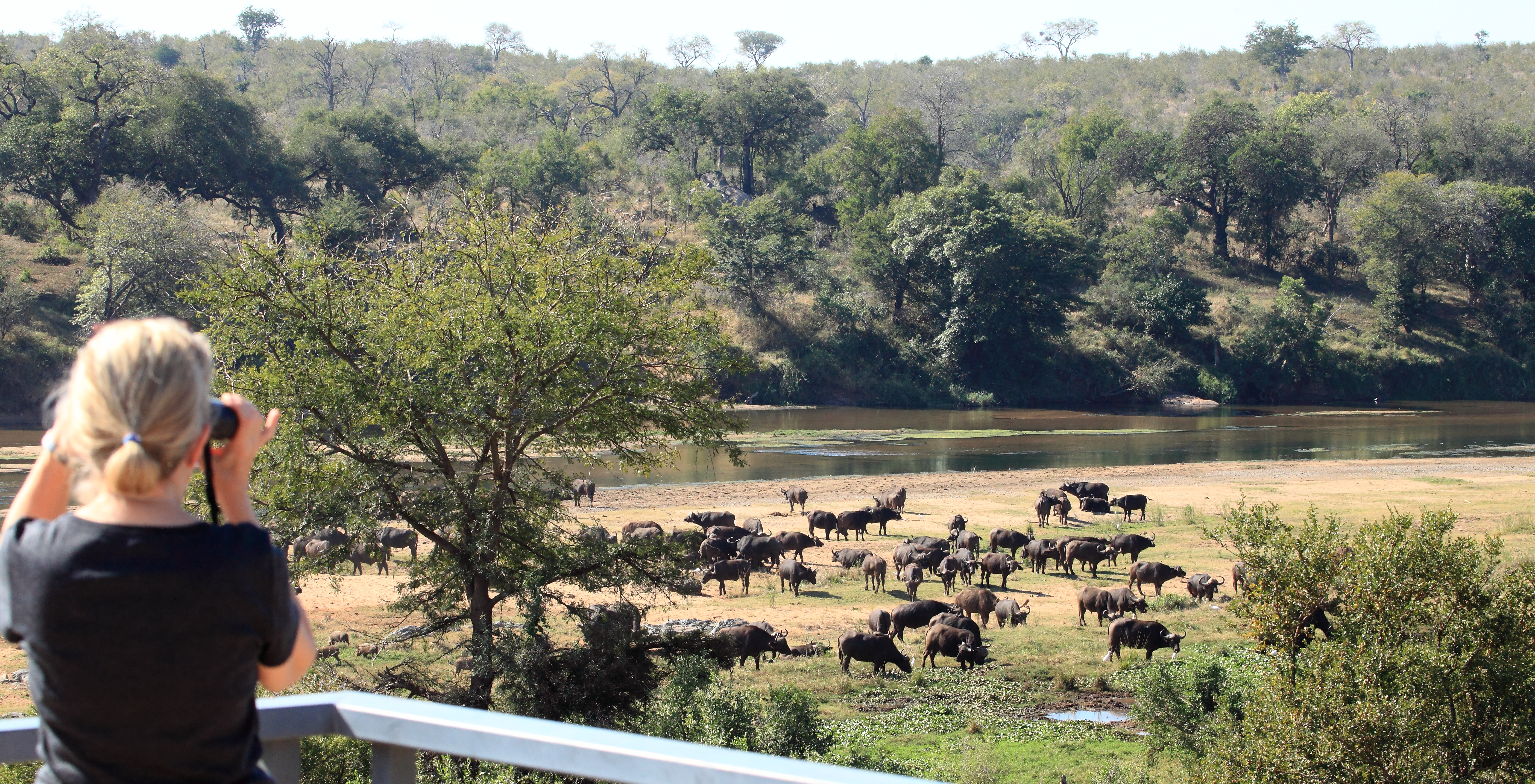 Mjejane Reserve - Herd of Buffalo