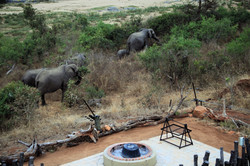 Sharing a meal with elephants