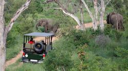 Mjejane Game Reserve - On Drive