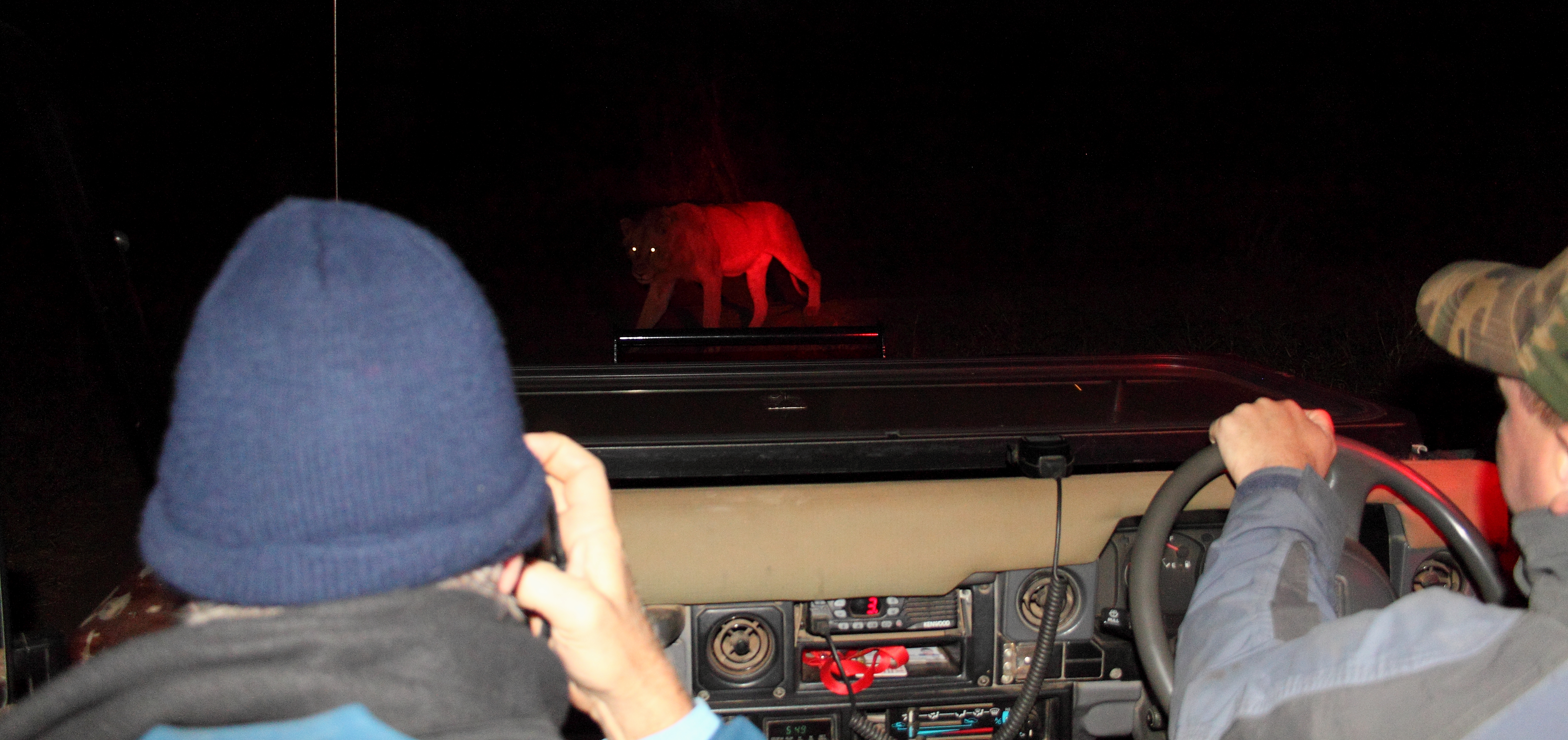 Mjejane Reserve - Night Drives