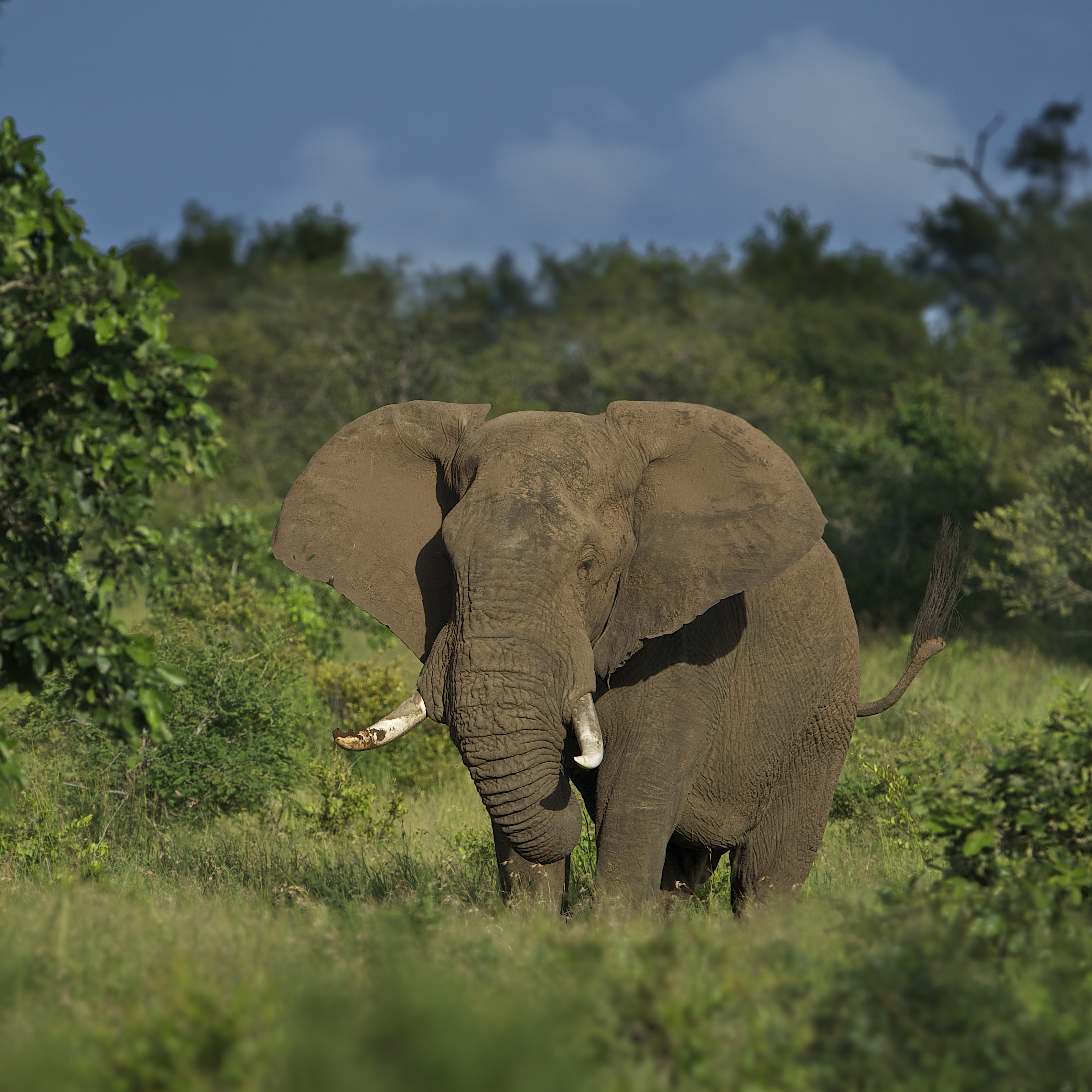 Elephants on Leadwood Estate