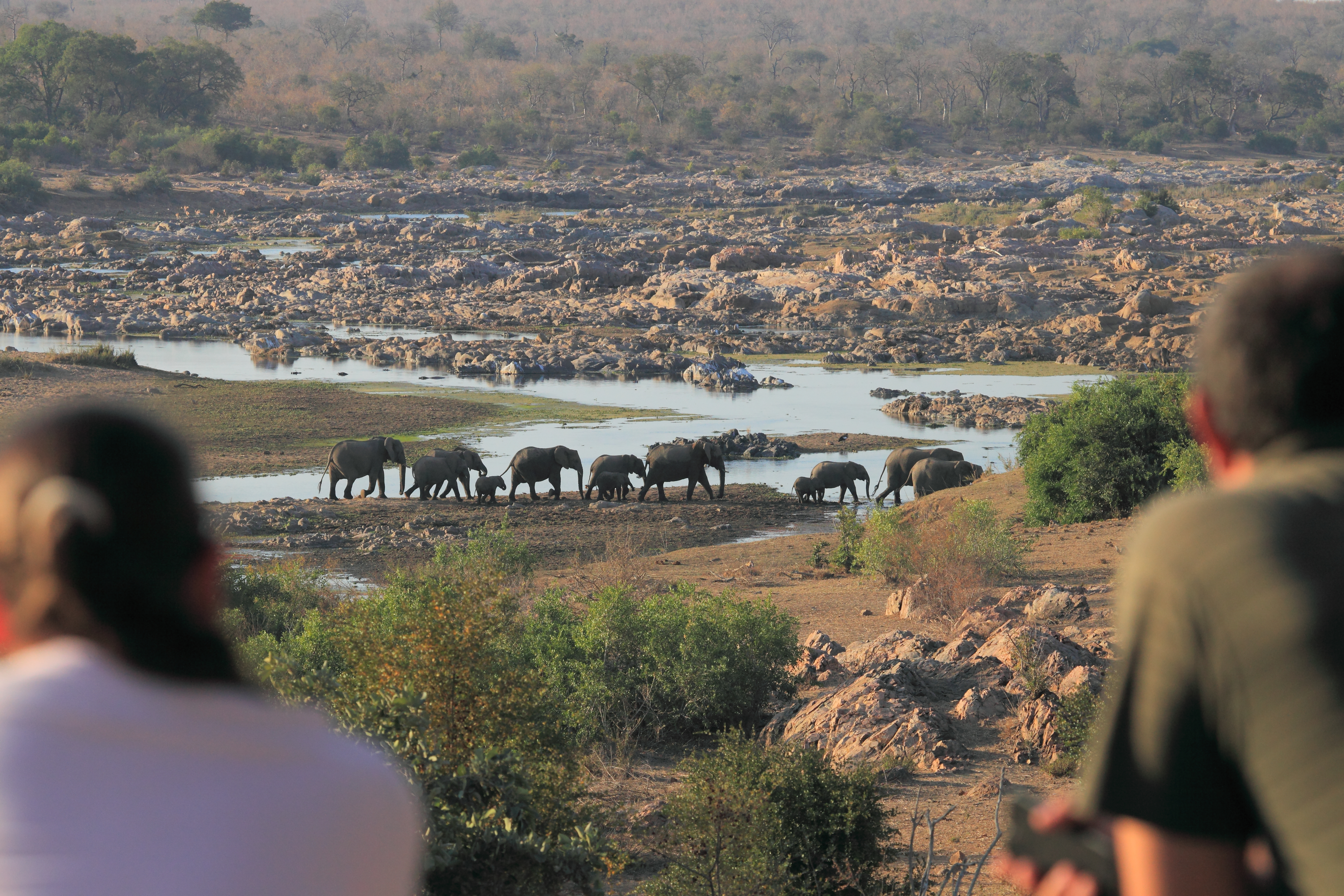 Mjejane Reserve - Herd of Elephants