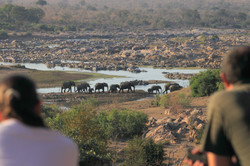 Mjejane Reserve - Herd of Elephants