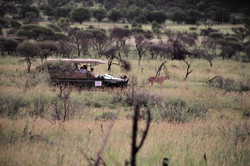 Lions on Black Rhino Reserve