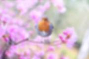 beautiful-bird-bloom-414181.jpg