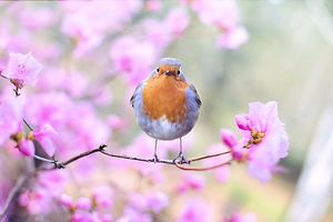 beautiful-bird-bloom-414181.jpg