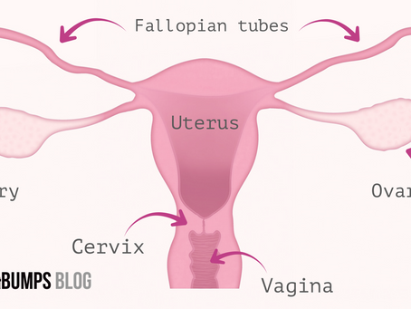 5 weird and wonderful facts about the female reproductive system