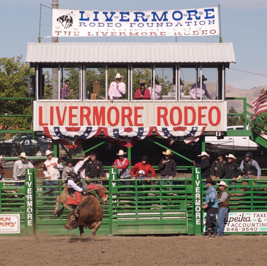 Bull Rider  001