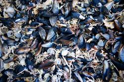 shells  001