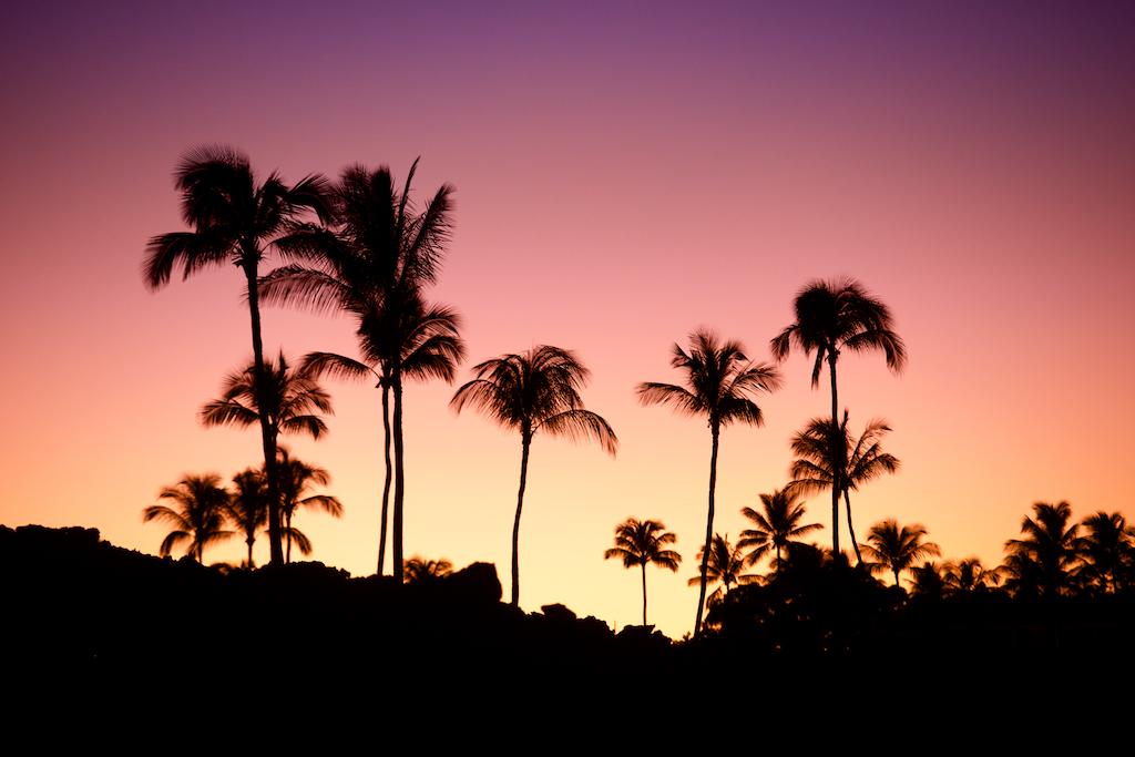 Palm Trees  001