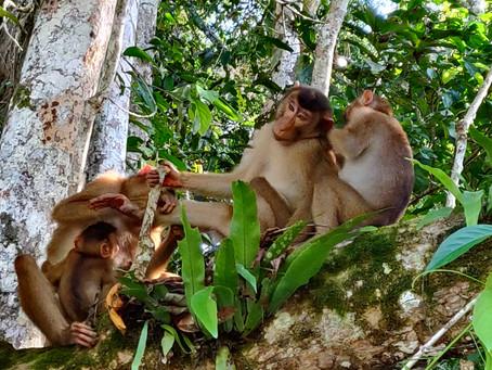 Südostasien aus der Naturbengelperspektive (Teil 2/2)