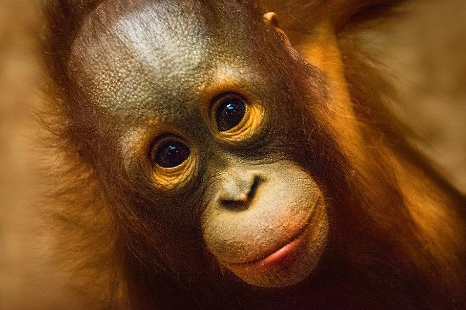 monkey-4226392_1920.jpg