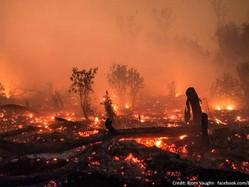 LIAR, LIAR, FOREST ON FIRE.