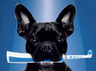 agız ve diş sağlığı köpek.jpg