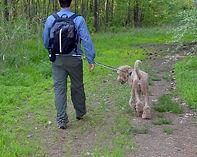Black Rhino Best Dog Leash for Hiking