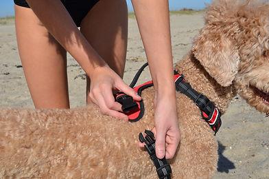 Black Rhino Dog Harness