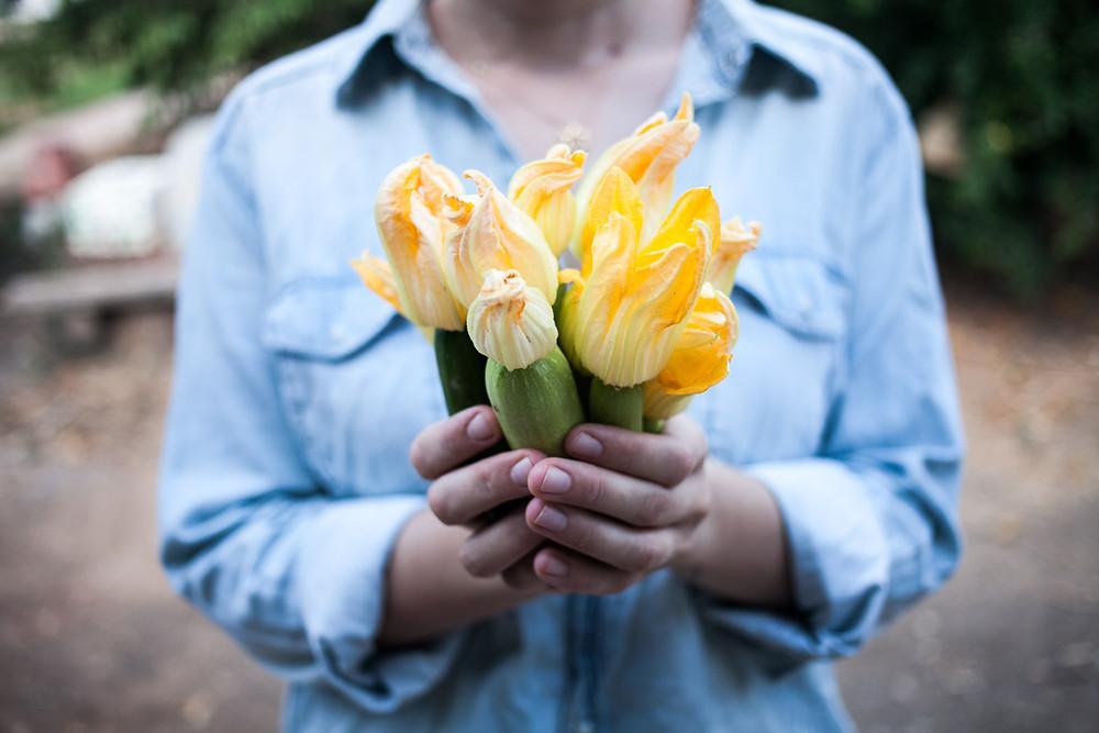 פרחי זוקיני וקישואים