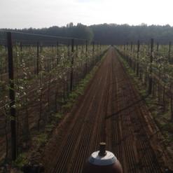 palen wijngaard