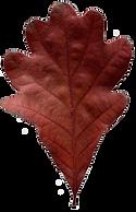 Leaf-03-wix.png