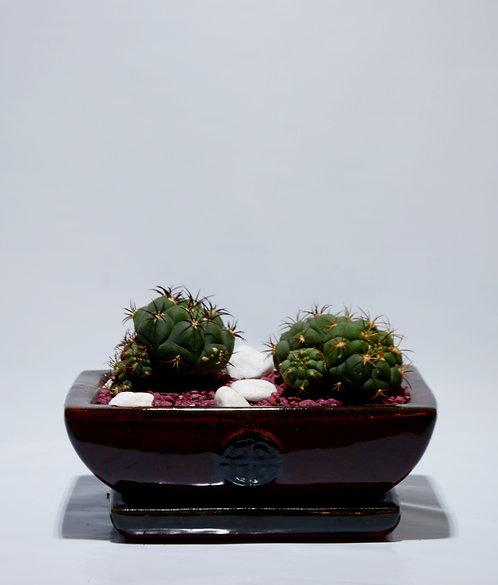 Copia de Composición de cactus