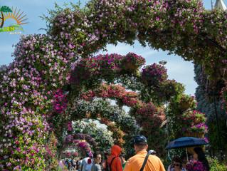 Barnazen Visita al mayor jardin florecido del mundo (DUBAI-EAU)
