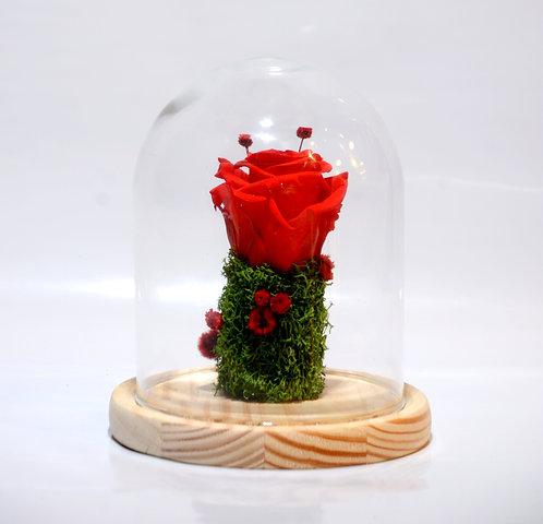Rosa eterna en cupula de cristal y base de madera