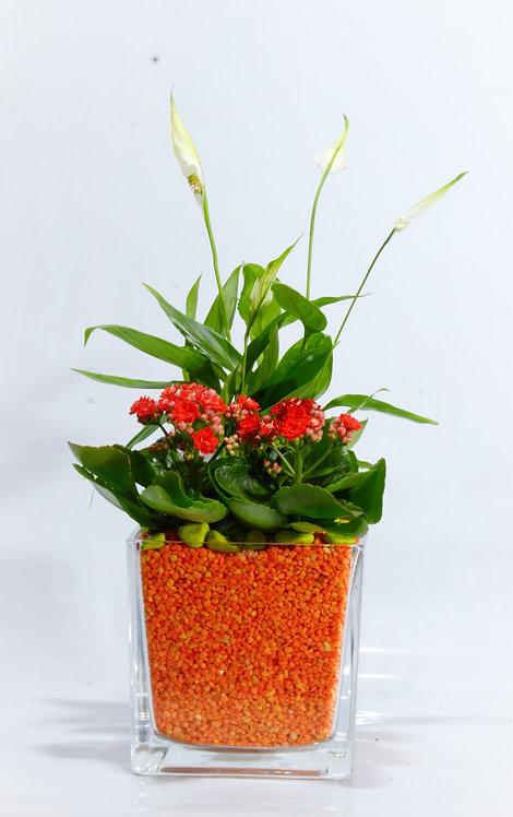 Plantas de interior en base de cristal cuadrada